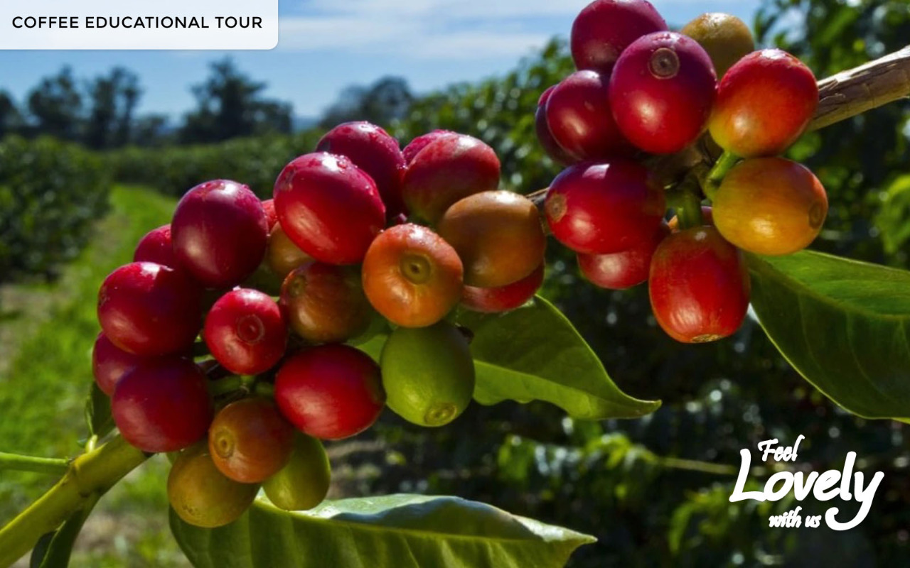 3D2N COFFEE EDUCATIONAL TOUR